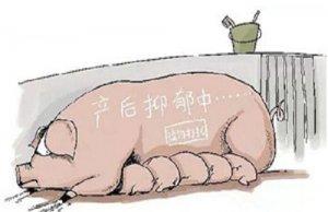 母猪生产完之后食欲差