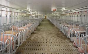 冬季养猪场房采暖方式的分析