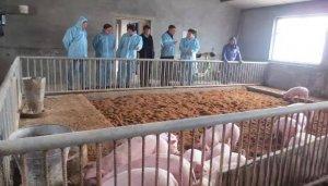 养猪不容易,2017年所有生猪养殖户都要面对的几大问题
