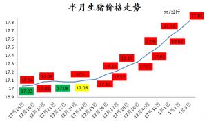 猪价一改往年春节前颓势,向18元/公斤发