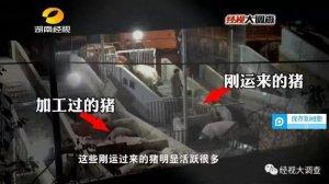 """湖南湘潭回应""""泥浆灌猪"""":统糠加水 无毒没影响"""