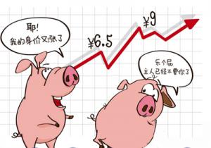 元旦后首周全国猪价冲