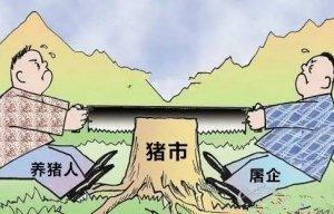 屠企强势压价 猪价急转而下 9元/斤能否持续至春节?
