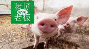 猪的叫声真难听