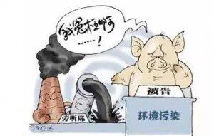 一个农民的心声:养猪真的会污染环境吗?