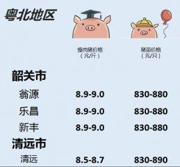 1月20日 广东生猪行