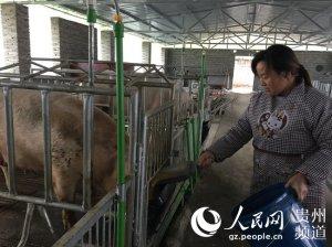 王永梅:养猪致富领头雁