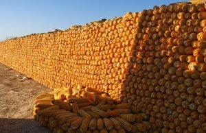 """""""一号文件""""解读:玉米降库存或成调结构"""