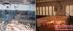 现代化猪场保温系统设