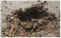 应用酶来改善水质和塘底