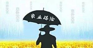 国家如此重视的农业保险,为什么农民却认