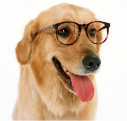 人被狗咬伤后,注射狂犬病疫苗吗?科学家给你解释!
