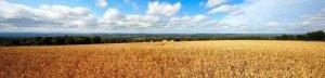 2017环保高压政策要继续,养殖大户迎来春