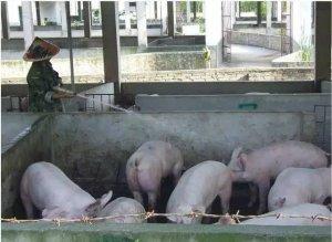 非禁养区250头内小猪场也要被拆 福建2017