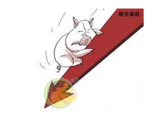 生猪价一路下跌 跌至7.2元/斤 部分养殖户出栏止损