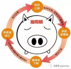 为什么你理解的猪周期和别人不一样
