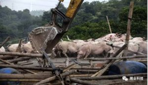 养猪大省养殖规模急剧萎缩,今年将继续关