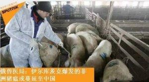 惊!俄罗斯发出预警:此疫病或将蔓延至中国