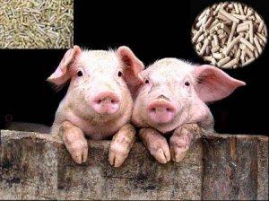 饲料的蛋白指标越高饲料就越好吗?