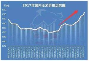 揭秘:4月玉米价格大预测!解析3月玉米涨