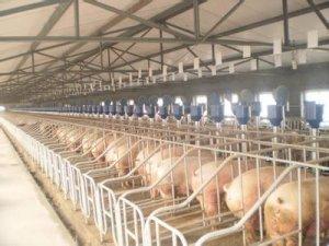 猪场驱虫及驱虫后期防