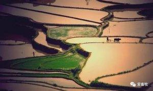 太美了!青山绿水间建起人畜分离、粉墙黛