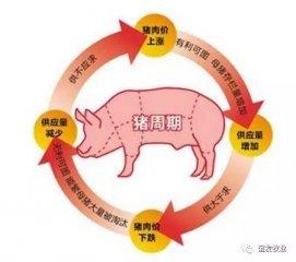 一个普通的养猪人求救心声!