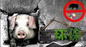 2017年这里禁养区扩大40%,6495家猪场惨被清退