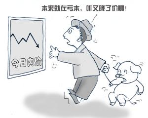 国内猪价逼近15元/公斤 养殖户防线或崩溃 价格继续回落!