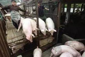 2017年04月22国内各省生猪、饲料原料报价