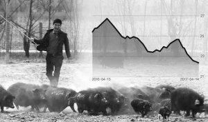 猪价暴跌逼近7元/斤,谁在挑战养殖户的防