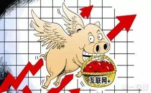 互联网行业也盯上养猪了!他们将血本无归,还是颠覆猪业?