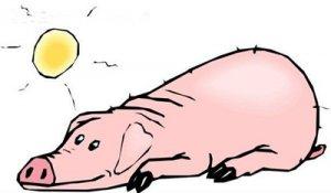 母猪产后第一周该做哪