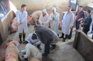 农业部:兽医巨大缺口 解决基础兽医待遇