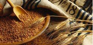 大麦-高粱型饲粮中添加酵母培养物对肥育猪生产指标的影响
