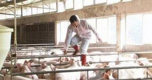 多年以后 你还记得当初为何选择养猪行业