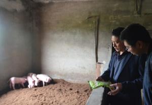自发研制发酵床,猪崽存活率达99%,提升5