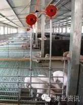 只需三步就可以轻松解决猪场的环境污染