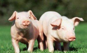 八大猪药用药误区,你中招了吗?