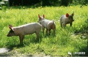 农业部发布会,关于农业绿色发展五大行动