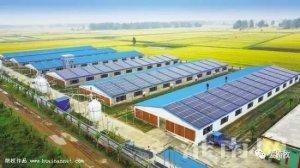 赞!房顶发电,房内养猪,新能源环保又节能!
