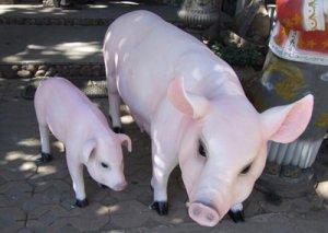 看猪尿初辨猪病,就这么简单!
