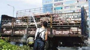 2017年5月30日全国生猪市场行情汇总