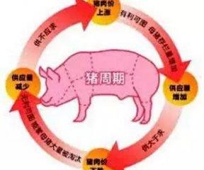 猪周期开始下行 部分饲养群体开始减产止