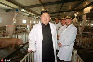 金正恩视察养猪厂,朝鲜为什么把猪场称猪厂?