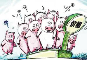 业内人士:今年下半年的猪会比去年同期还要多