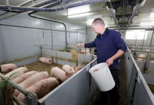 """为什么德国可以成为养猪""""大哥""""?"""