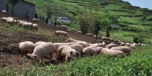 猪场建设--猪场绿化的优缺点有哪些?