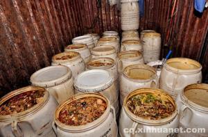 可恶至极!一村庄成餐厨垃圾集散地 圈养400多头潲水猪