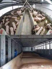 """养猪人无处容身,环保""""逼迁""""如何应对?"""